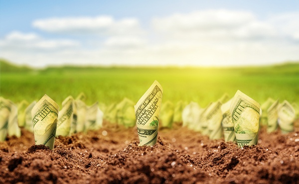 American-dollars-grow-from-the-ground.jpg